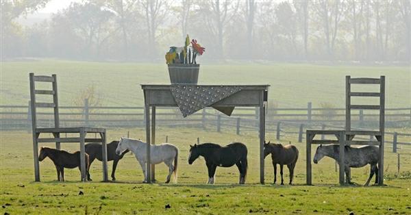 Креативный шелтер для лошадей - фото horseshelter, главная Содержание лошади , конный журнал EquiLIfe