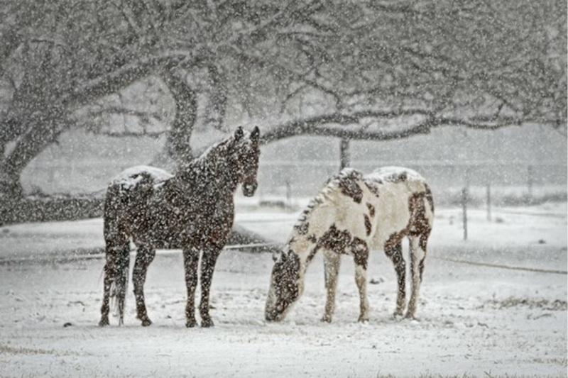 Содержание лошадей зимой - фото winter-care-horses, главная Здоровье лошади Содержание лошади , конный журнал EquiLIfe