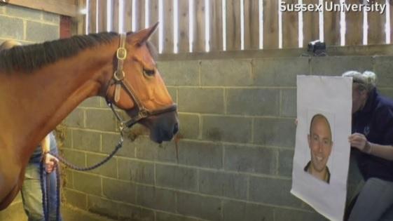 Исследования реакции лошадей на эмоции человека - фото 01, главная Содержание лошади , конный журнал EquiLIfe