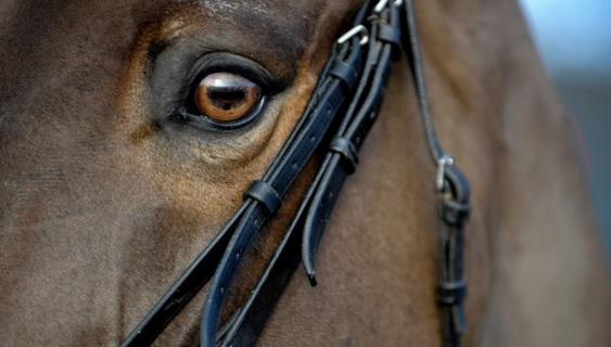 Исследования реакции лошадей на эмоции человека - фото 02, главная Содержание лошади , конный журнал EquiLIfe