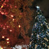 Вена декабрь 2019: Венская Школа верховой езды + Рождественская Вена - фото IMG_20191130_175543-200x200, , конный журнал EquiLIfe