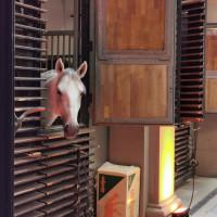 Вена декабрь 2019: Венская Школа верховой езды + Рождественская Вена - фото IMG_20191213_132951-200x200, , конный журнал EquiLIfe