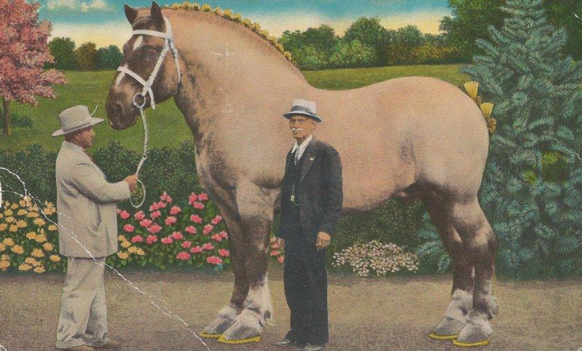 Бруклин Суприм - самая большая лошадь в истории - фото 24519.pbc4i0.840, главная Интересное о лошади , конный журнал EquiLIfe