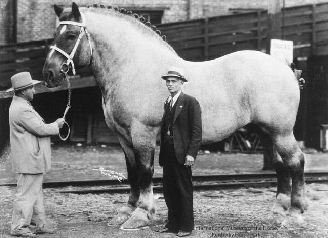 Бруклин Суприм - самая большая лошадь в истории - фото i, главная Интересное о лошади , конный журнал EquiLIfe