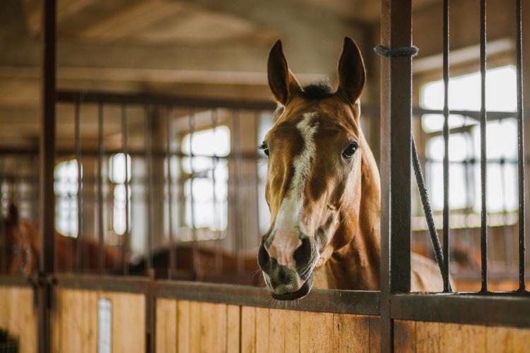 Конюшня во время самоизоляции - фото 08-9, главная Здоровье лошади Содержание лошади , конный журнал EquiLIfe