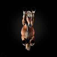 «Under-Horse» - проект Андриуса Бурбы (Andrius Burba) - фото 0eb7b51284cd47bb6-200x200, главная Фото , конный журнал EquiLIfe