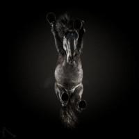«Under-Horse» - проект Андриуса Бурбы (Andrius Burba) - фото 14-58bcf1e18cc81__880-768x768-200x200, главная Фото , конный журнал EquiLIfe