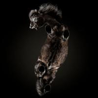 «Under-Horse» - проект Андриуса Бурбы (Andrius Burba) - фото 1490026307_6-zabavnye-fotki-loshadey-snizu-200x200, главная Фото , конный журнал EquiLIfe