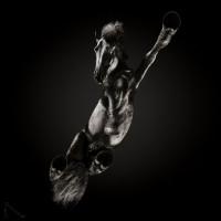 «Under-Horse» - проект Андриуса Бурбы (Andrius Burba) - фото 1579631580_62-p-chernie-foni-s-loshadmi-114-200x200, главная Фото , конный журнал EquiLIfe