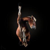 «Under-Horse» - проект Андриуса Бурбы (Andrius Burba) - фото 20171003143639-200x200, главная Фото , конный журнал EquiLIfe