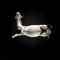 «Under-Horse» - проект Андриуса Бурбы (Andrius Burba) - фото 20171003143640_0-200x200, главная Фото , конный журнал EquiLIfe
