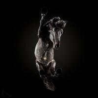 «Under-Horse» - проект Андриуса Бурбы (Andrius Burba) - фото 20171003143641_0-200x200, главная Фото , конный журнал EquiLIfe