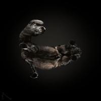 «Under-Horse» - проект Андриуса Бурбы (Andrius Burba) - фото 6-58bcf1c72c177__880-200x200, главная Фото , конный журнал EquiLIfe