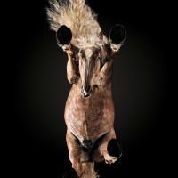 «Under-Horse» - проект Андриуса Бурбы (Andrius Burba) - фото a7545654c0f25ade0111aefc7845cbf3-200x200, главная Фото , конный журнал EquiLIfe