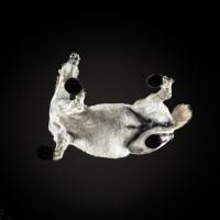 «Under-Horse» - проект Андриуса Бурбы (Andrius Burba) - фото gale-animales-SF-12-200x200, главная Фото , конный журнал EquiLIfe