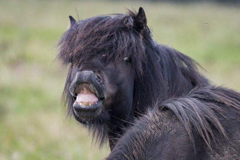 Болезни лошадей. Часть 5: Болезни нервной системы, органов чувств и стереотипное поведение - фото original, главная Здоровье лошади , конный журнал EquiLIfe