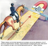 Dressage Solutions - лайфхаки для выездки - фото 10_wm-200x200, главная Фото , конный журнал EquiLIfe