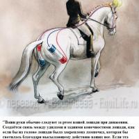 Dressage Solutions - лайфхаки для выездки - фото 11_wm-200x200, главная Фото , конный журнал EquiLIfe