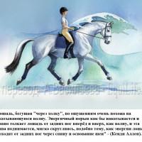 Dressage Solutions - лайфхаки для выездки - фото 12_wm-200x200, главная Фото , конный журнал EquiLIfe