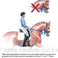 Dressage Solutions - лайфхаки для выездки - фото 13_wm-200x200, главная Фото , конный журнал EquiLIfe