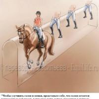 Dressage Solutions - лайфхаки для выездки - фото 18_wm-200x200, главная Фото , конный журнал EquiLIfe