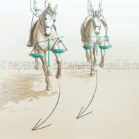 Dressage Solutions - лайфхаки для выездки (2) - фото 39YEAld1RKM_wm-200x200, главная Фото , конный журнал EquiLIfe