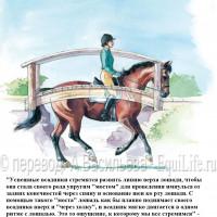 Dressage Solutions - лайфхаки для выездки - фото 8_wm-200x200, главная Фото , конный журнал EquiLIfe