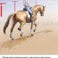 Dressage Solutions - лайфхаки для выездки (2) - фото QN5zC-xDdI4_wm-200x200, главная Фото , конный журнал EquiLIfe