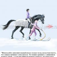 Dressage Solutions - лайфхаки для выездки (2) - фото allzoramxHc_wm-200x200, главная Фото , конный журнал EquiLIfe