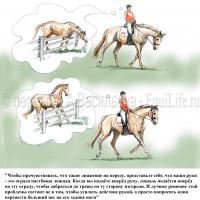 Dressage Solutions - лайфхаки для выездки (2) - фото ma48LE29szw_wm-200x200, главная Фото , конный журнал EquiLIfe