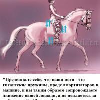 Dressage Solutions - лайфхаки для выездки (2) - фото ui8xPYZmy0o_wm-200x200, главная Фото , конный журнал EquiLIfe