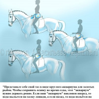 Dressage Solutions - лайфхаки для выездки (2) - фото v7zdBHTWx2I_wm-200x200, главная Фото , конный журнал EquiLIfe
