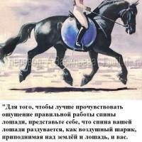 Dressage Solutions - лайфхаки для выездки (2) - фото xdhhME1cprM_wm-200x200, главная Фото , конный журнал EquiLIfe