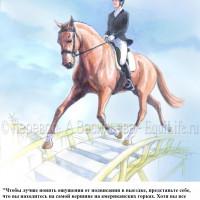 Dressage Solutions - лайфхаки для выездки (2) - фото y1283BPOEkU_wm-200x200, главная Фото , конный журнал EquiLIfe