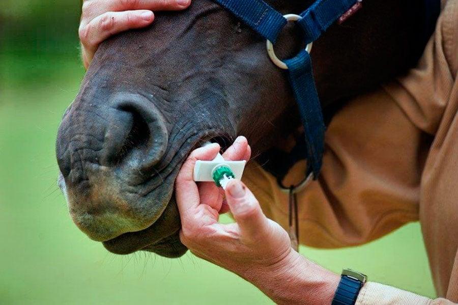 Болезни лошадей. Часть 6: Паразитарные болезни - фото , главная Здоровье лошади , конный журнал EquiLIfe
