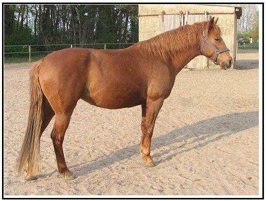Как выглядела лошадь средневековья? - фото 01-2, главная Книги о лошадях Конные истории Фильмы про лошадей , конный журнал EquiLIfe