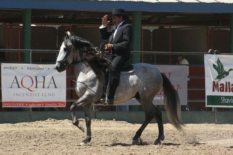 Как выглядела лошадь средневековья? - фото 01-3, главная Книги о лошадях Конные истории Фильмы про лошадей , конный журнал EquiLIfe