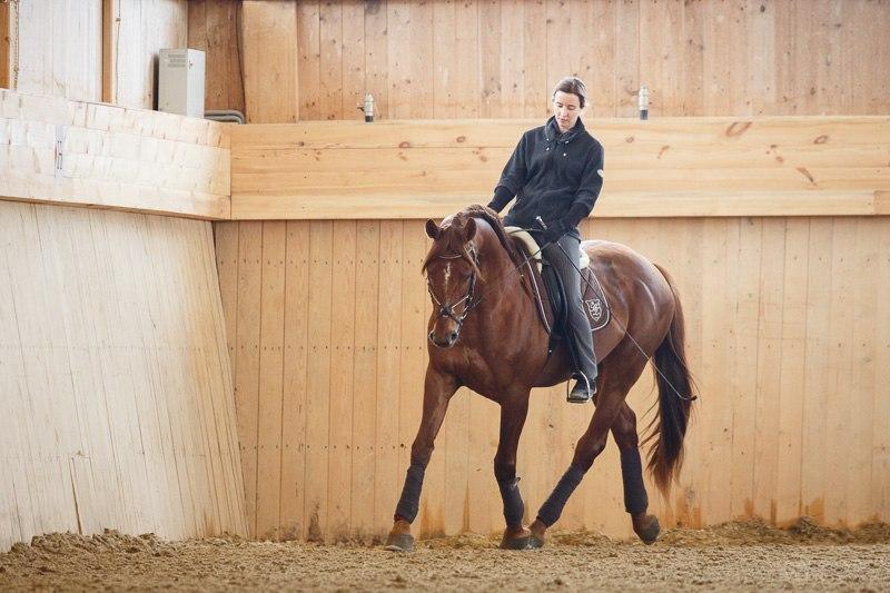 Готова ли ваша лошадь к обучению пиаффе? - фото 03-10, главная Тренинг , конный журнал EquiLIfe