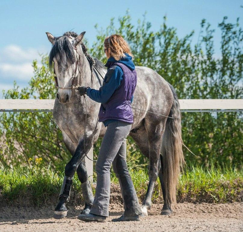 Готова ли ваша лошадь к обучению пиаффе? - фото 03-2, главная Тренинг , конный журнал EquiLIfe