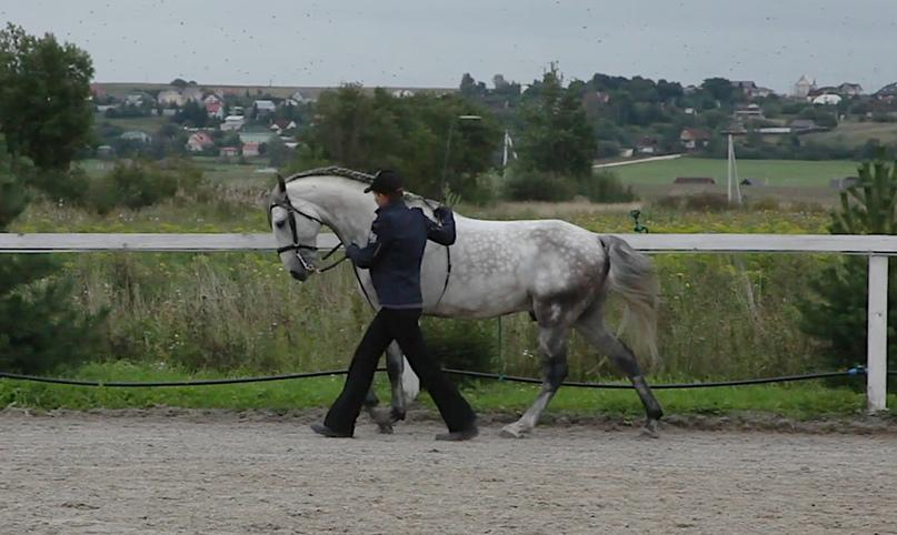 Готова ли ваша лошадь к обучению пиаффе? - фото 03-4, главная Тренинг , конный журнал EquiLIfe