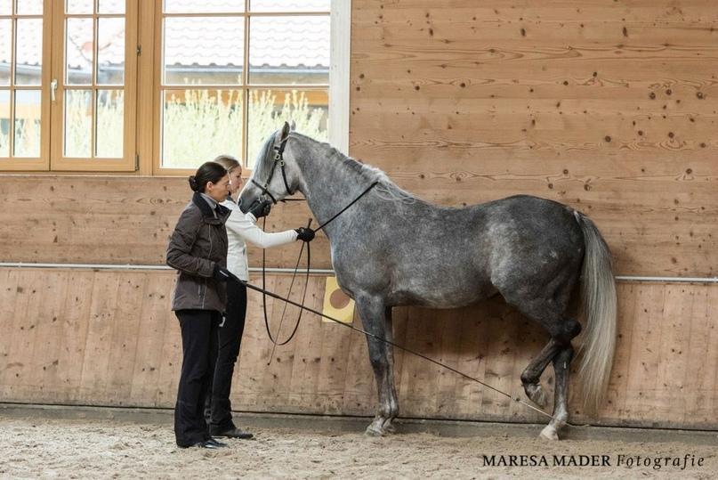 Готова ли ваша лошадь к обучению пиаффе? - фото 03-5, главная Тренинг , конный журнал EquiLIfe