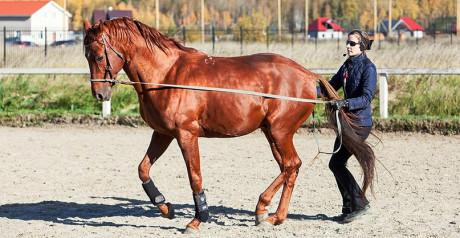 Лошади понимают намерения человека - фото 03-8-460x238, главная Интересное о лошади Новости Поведение лошади , конный журнал EquiLIfe