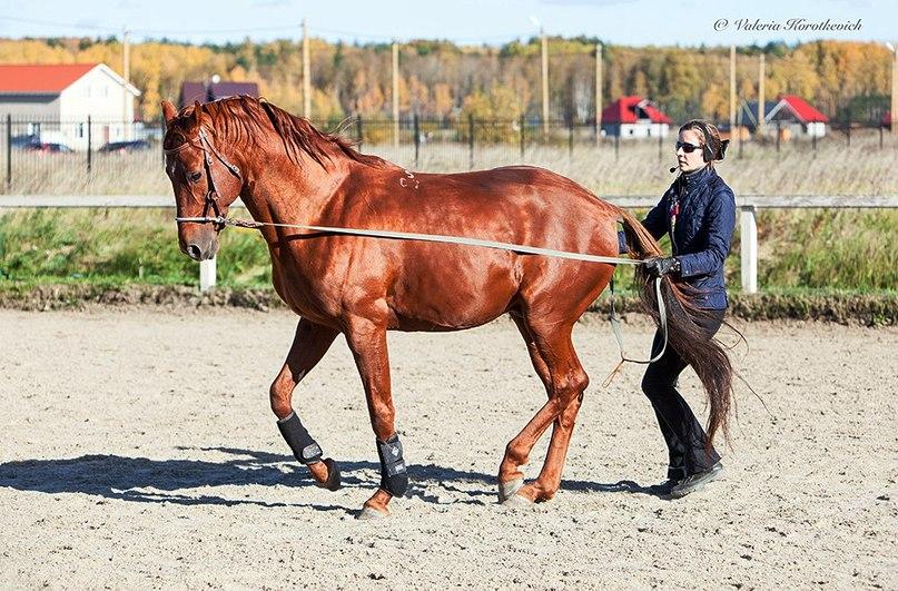 Готова ли ваша лошадь к обучению пиаффе? - фото 03-8, главная Тренинг , конный журнал EquiLIfe
