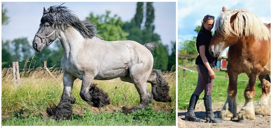 Калининград - фото 06, , конный журнал EquiLIfe
