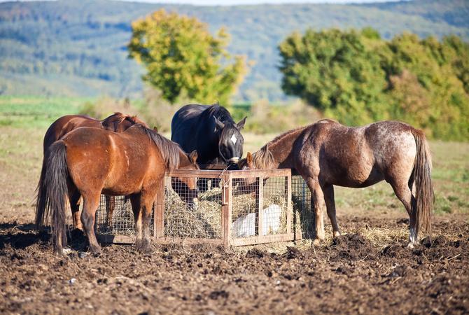 Правильное хранение сена - фото 01-01-14, главная Здоровье лошади Рацион Содержание лошади , конный журнал EquiLIfe