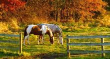 Фото: horsefeedblog.com
