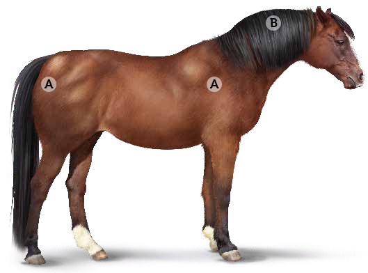 Осенняя трава опасна для лошадей - фото ems, главная Рацион Содержание лошади , конный журнал EquiLIfe