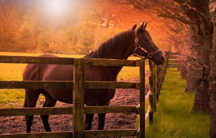 Осенняя трава опасна для лошадей - фото loshad-zabor-ograzhdenie-astbishche-kon-gnedaia-gnedoi-vzgli, главная Рацион Содержание лошади , конный журнал EquiLIfe