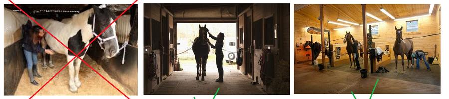 Опасна ли пыль при чистке лошади? - фото 01-19-1, главная Содержание лошади , конный журнал EquiLIfe