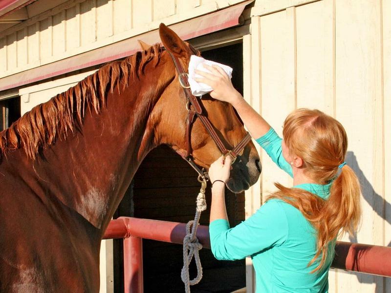 Опасна ли пыль при чистке лошади? - фото 01-5-1-2, главная Содержание лошади , конный журнал EquiLIfe